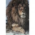 Cuadro vidrio Proud Lion 120x180cm